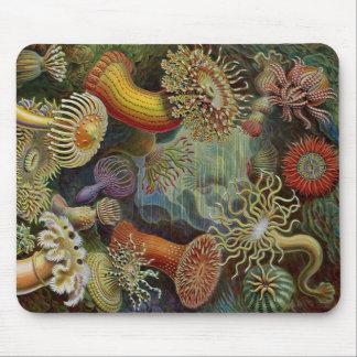 Ernst Haeckel havsanemoner Mus Mattor