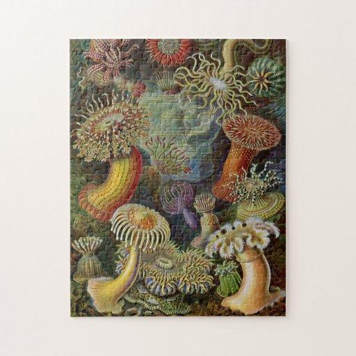Ernst Haeckel havsanemoner Pussel Med Foto