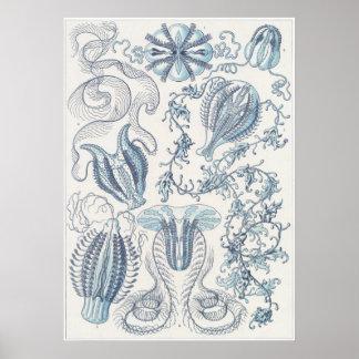 Ernst Haeckel konsttryck: Ctenophorae Poster