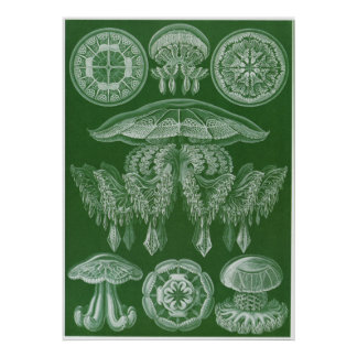 Ernst Haeckel konsttryck: Discomedusae Poster