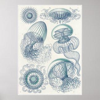 Ernst Haeckel konsttryck: Leptomedusae Poster