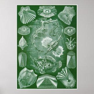 Ernst Haeckel konsttryck: Teleostei Poster