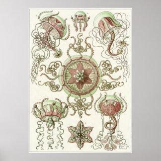 Ernst Haeckel konsttryck: Trachomedusae Poster