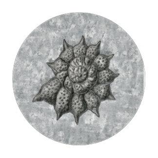 Ernst Haeckel Radiolariasnäcka 1