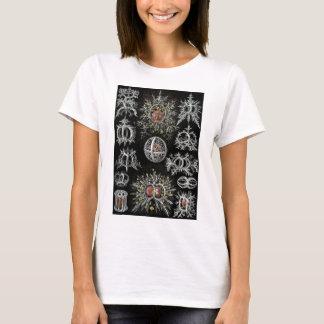 Ernst Haeckels Stephoidea T Shirt