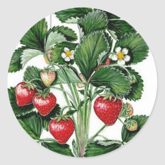 Etikett för lock för jordgubbesyltburk klistermärke