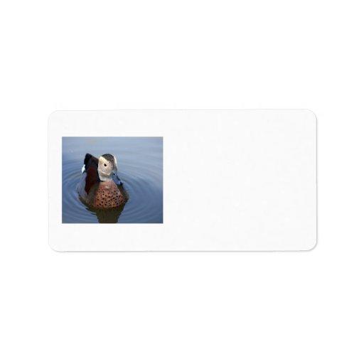 Etiketter för ringed foto för kricka för anka adressetikett