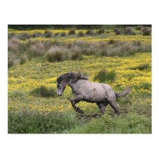 Ett hästspring i ett fält av gula vildblommar vykort
