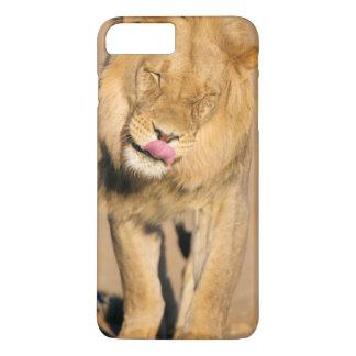 Ett lejont skaka dess huvud och slicka dess mun