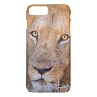 Ett porträtt av ett lejont