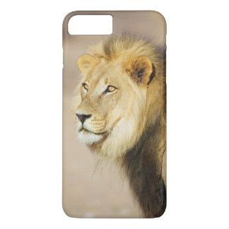 Ett porträtt av ett lejont, Transfrontier