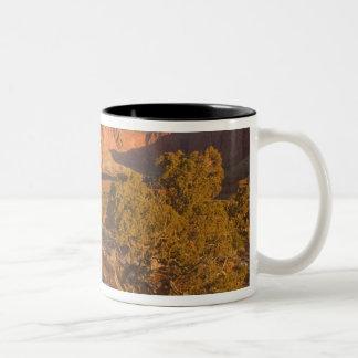 Ett träd för osteosperma för Utah enJuniperus) i 2 Två-Tonad Mugg