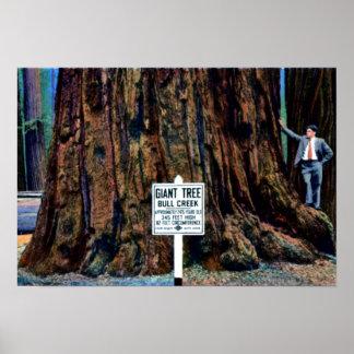 Eureka Kalifornien Humboldt redwoodträddelstatspar Poster