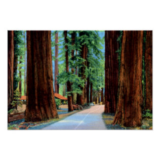 Eureka Kalifornien Richardson dunge Humboldt Count Poster