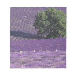 Europa frankrike, Provence, Sault, lavendelfält Anteckningsblock