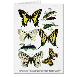 Européfjärilar pläterar I Hälsningskort
