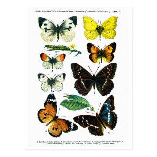 Européfjärilar pläterar vykort II