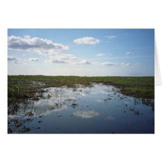 Everglades Hälsningskort