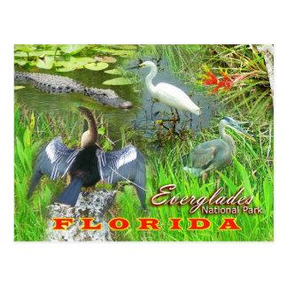 Everglades nationalpark, Florida Vykort