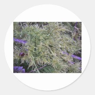 Exmoor växt- och lilastems 1 runt klistermärke