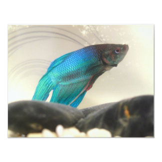 Exotisk Betta fiskCloseup 10,8 X 14 Cm Inbjudningskort