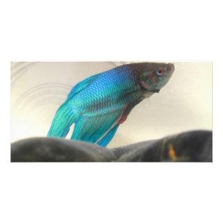 Exotisk Betta fiskCloseup Fotokort