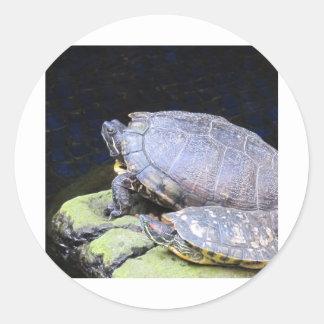 Få sköldpaddor för en solbränna runt klistermärke