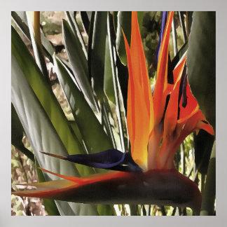 Fågel av paradiset (Strelitzia) Poster