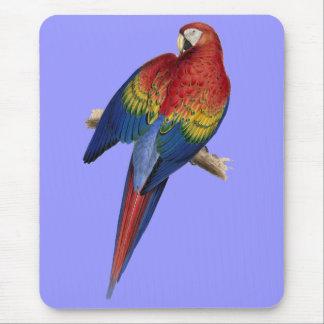 Fågel för grönt för blått för Macawpapegoja röd Musmatta