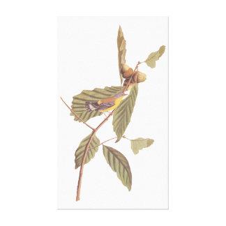 Fågel för sångare för vintageAudubon Magnolia Canvastryck