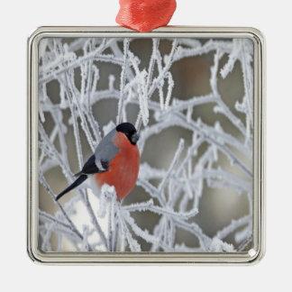 Fågel på en isiggren julgransprydnad metall