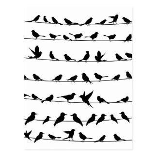 Fågel på en wire4 vykort