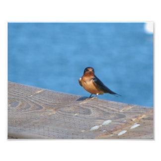Fågel på skeppsdocka fotokonst