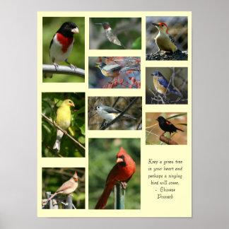 Fågelaffisch Poster