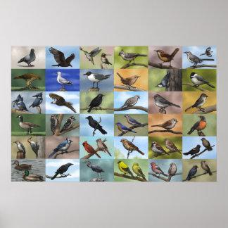 FågelPanoplytryck Poster