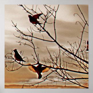 Fåglar Affisch