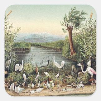 Fåglar av Caucasusen Fyrkantigt Klistermärke