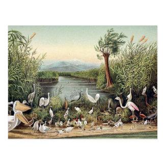 Fåglar av Caucasusen Vykort