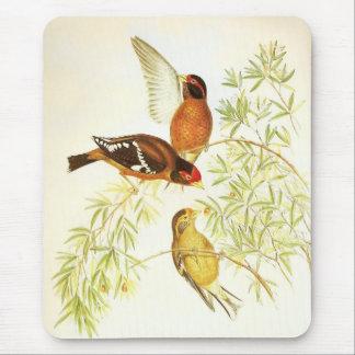 Fåglar för Finch för Mousepad vintage Spectacled Musmatta