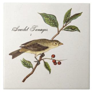 Fåglar för Songbird för fågel för scharlakansröd Kakelplatta