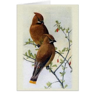 Fåglar och bär hälsningskort