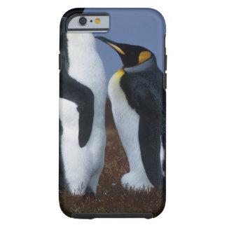 Falkland Islands. Stativ för två kungpingvin in Tough iPhone 6 Fodral