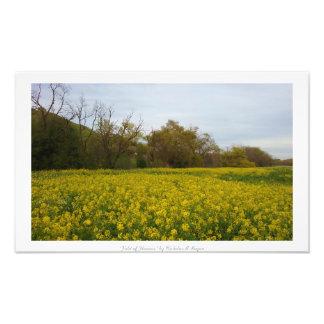"""""""Fält av blommor,"""" natur Fototryck"""