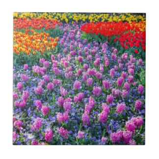 Fält av rosa hyacint och röda tulpan kakelplatta