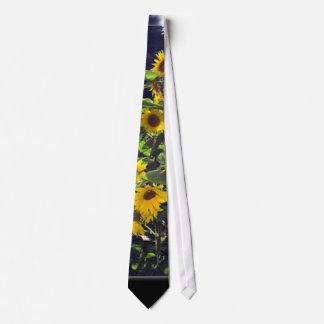 Fält av solrosor i blommar slips