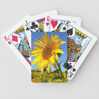 Fält av solrosor, solros spelkort
