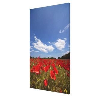 Fältfullt av röda blommor canvastryck