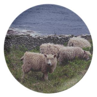 Får Grazeing för ull för södra Devon kusten långa Tallrik