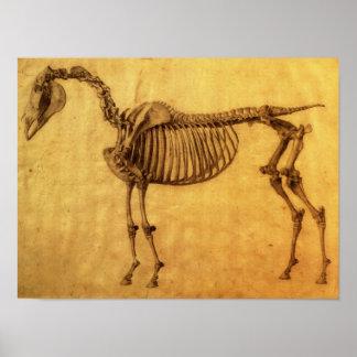 Färdig studie för det första Skeletal bord Poster