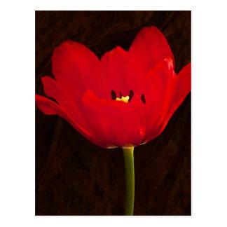 Färgrik blom- Stem för röd tulpanblomma Vykort